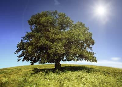 big green tree with sun