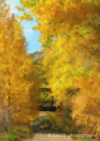 colorful cottonwood trees with footbridge